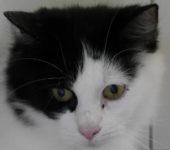 Portrait Lilou