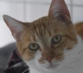 Portrait Miel