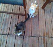 Milo & Saphir