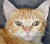 Portrait Clementine