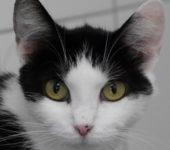 Portrait Violette