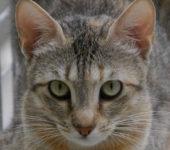 Portrait Gigi