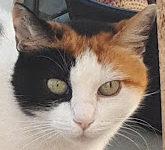 Portrait Minka