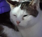 Portrait Jasper