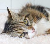 Portrait Meow