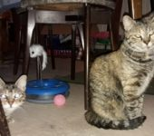 Portrait Cleo & Savanna (reserviert)