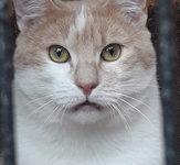 Portrait Skippy (reserviert)