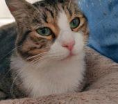 Portrait Alf (reserviert)