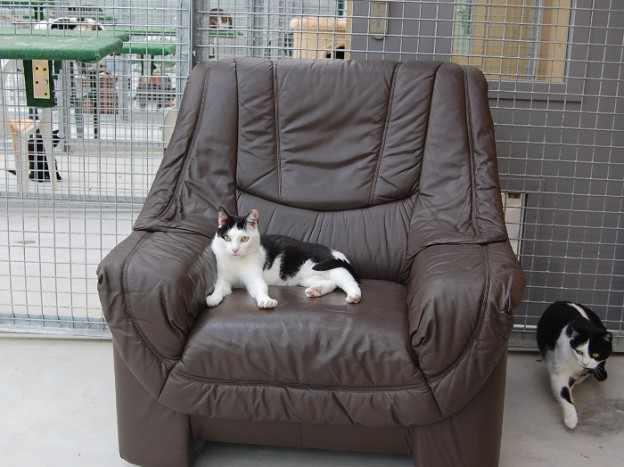 dons d un fauteuil et d une maisonnette pour les chats merci amistico fr. Black Bedroom Furniture Sets. Home Design Ideas